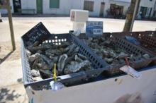 Huîtres fraîches de l'île